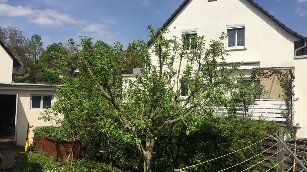 Baum beschnitt